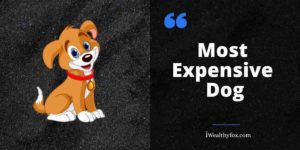 21 Most Expensive dog in the world iwealthyfox